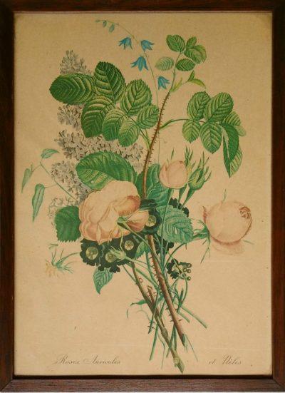 Roses Auricules et Neles (Opera)