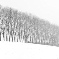 Federica Galli, Renato Luparia - Attraverso l'albero: storie di radici