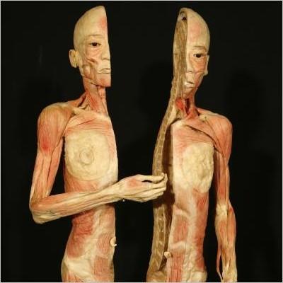 Human Bodies. The Exhibition - Torino