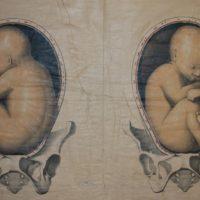 Venire alla luce - Dal concepimento al parto