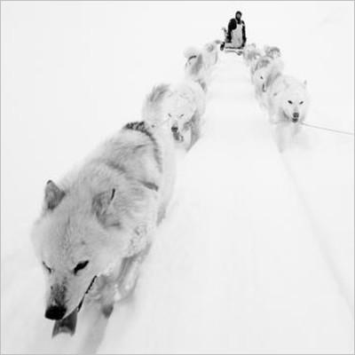 Artico. Ultima frontiera