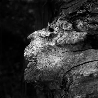 Dio si nasconde. Fotografie di Kozo Yano - Poesie di André Simoncini