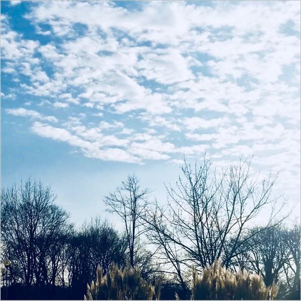 Jaya Cozzani Chandran - Cosimo Filippini. ll blu perenne del cielo
