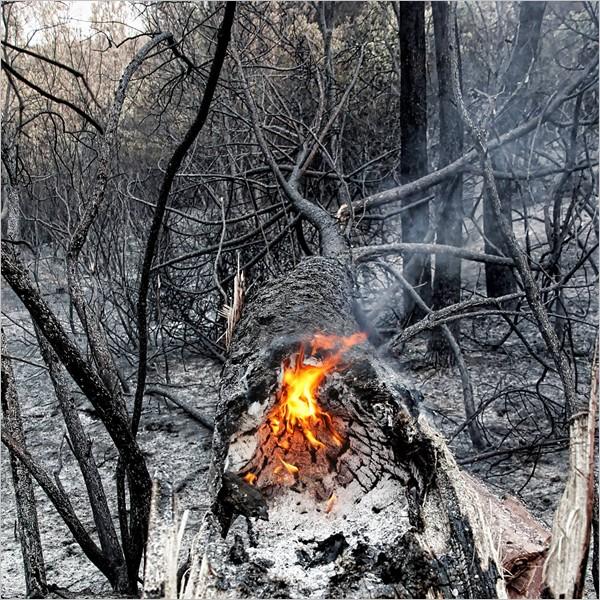 Ciro Ciliberti. Vesuvius, in elegia delle nude ceneri
