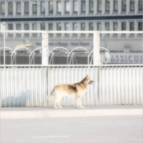 Milano15Agosto - fotografie di Max Botticelli