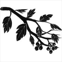 Plantae - Un'indagine tra Arte e Scienza sulle piante e i cambiamenti climatici