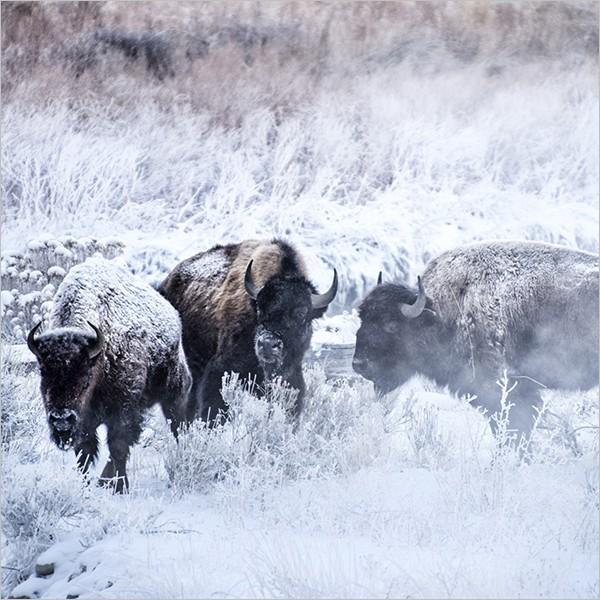 Incontro con Elisabetta Rosso: la natura selvaggia del Parco di Yellowstone