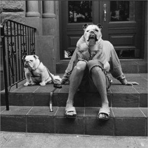 Elliott Erwitt: i cani sono come gli umani, solo con più capelli