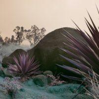 Labs New Artists II - Ottanta lavori visionari di venticinque fotografi