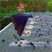 Marinus Boezem. Bird's-eye view