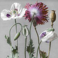 In-flore-scientia. Arte e botanica - Opere di Josef Hanel e Gabriela Maria Müller