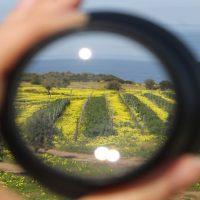 Concorso: The art of wines