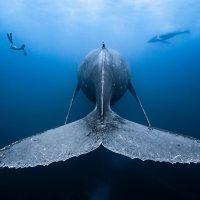 Il mare che vorrei - Milano Photo Week
