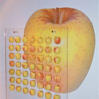 La passione per la mela al Palazzo Roccabruna di Trento