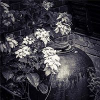 Barbara Luisi. India - Secret garden