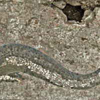 Mosaico dei draghi e dei delfini