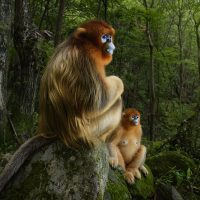 54. Wildlife Photographer of The Year