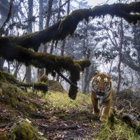 54. Wildlife Photographer of The Year