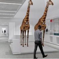 Kosmos, il nuovo Museo di Storia naturale a Pavia