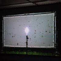 Henrik Håkansson. Blinded by the light - Video intallazione
