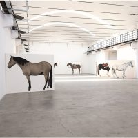 Lara Nickel. 12 horses - Homage to Jannis Kounellis