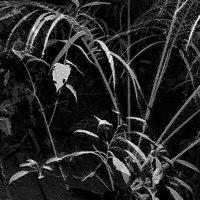Foreste plurali - Simposio multidisciplinare con Daniel Steegmann Mangrané