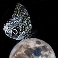 Luna: satellite, poesia & fantasie - Mostra collettiva