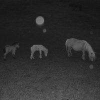 Miyuki Okuyama vince la prima edizione del Swiss Photo-Three Award