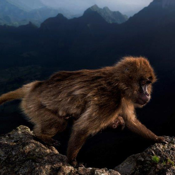 55. Wildlife Photographer of the Year - Anteprima