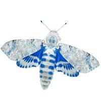 Moths - Getting nightburnt. Un progetto di Ortensia Sayre Macioci