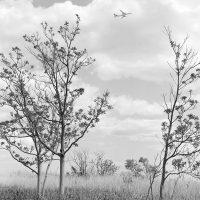 """Presentazione del volume """"The Sound of the Woodpecker Bill: New York City"""""""