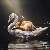 Unknownian - United