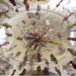 Florilegium. Installazione di Rebecca Louise Law