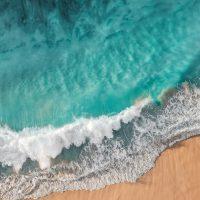 Concorso fotografico: Ocean Life