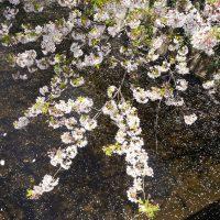 Reiko Hiramatsu. Paesaggi d'acqua - Castelnuovo Fotografia