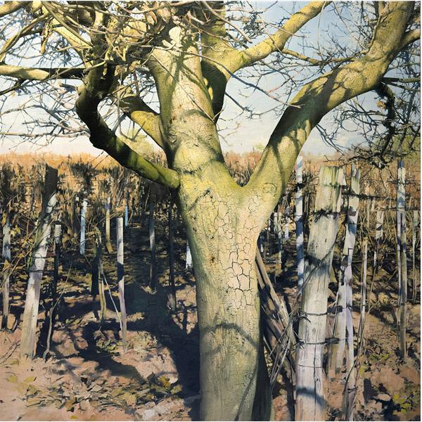 Matteo Massagrande. Gli alberi e la miniera - Intorno a Van Gogh