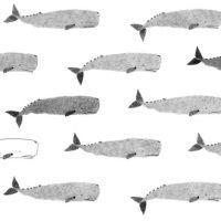 Andrea Antinori. 72 balene e altri animali
