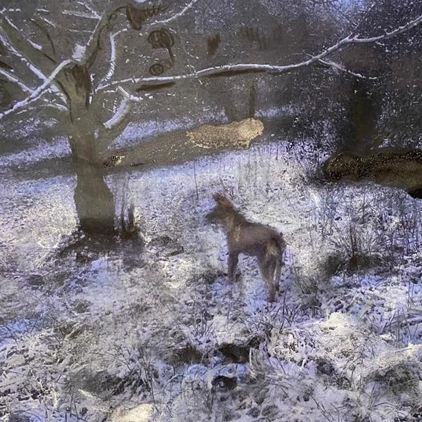 Dacia Manto. Nebulosa 11 - Beside Walden