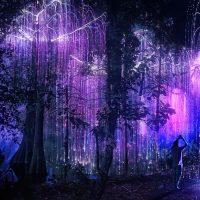 In Wonder(is)land - Maxi-installazioni artistiche immersive