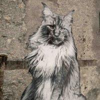 Yuri Catania. I gatti di Rovio