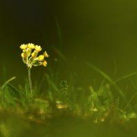 Maria Laura Verdoia. Natura in sogno - Un cammino di luce
