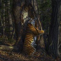56. Wildlife Photographer of the Year - Anteprima