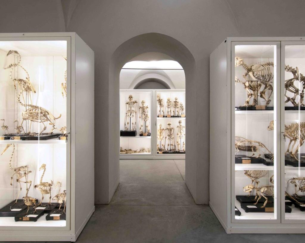 Kosmos, il Museo di Storia Naturale dell'Università di Pavia, apre i suoi depositi