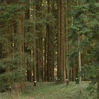 Lezione aperta di Mauro Agnoletti Storia del bosco (con note sul paesaggio rurale)